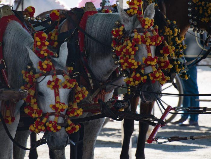 Feria Horses in Velez-Malaga