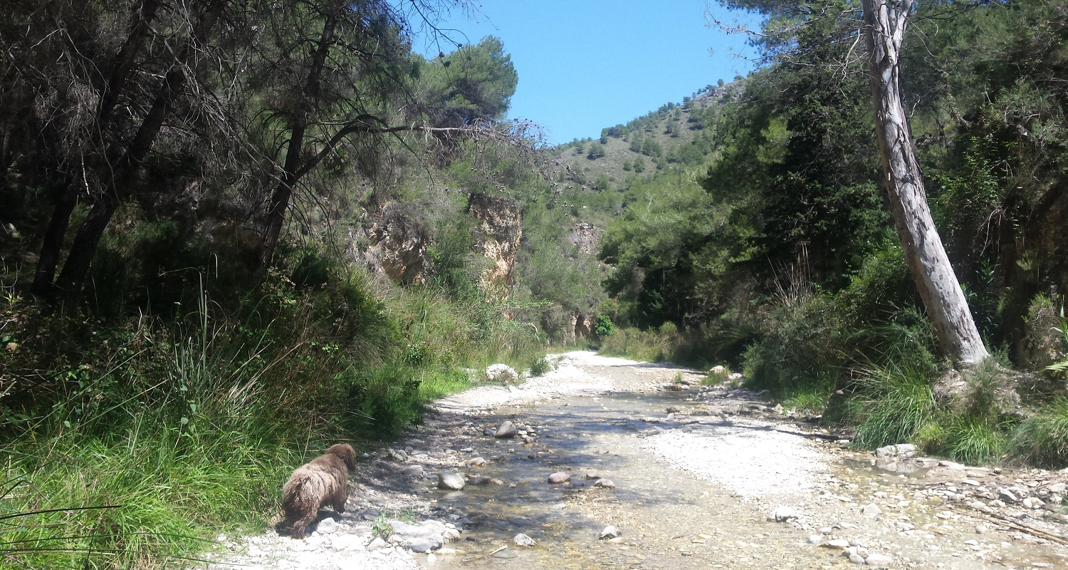 Walking and Hiking in the Axarquia