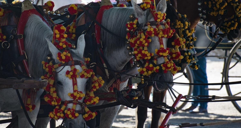 horses at axarquia feria