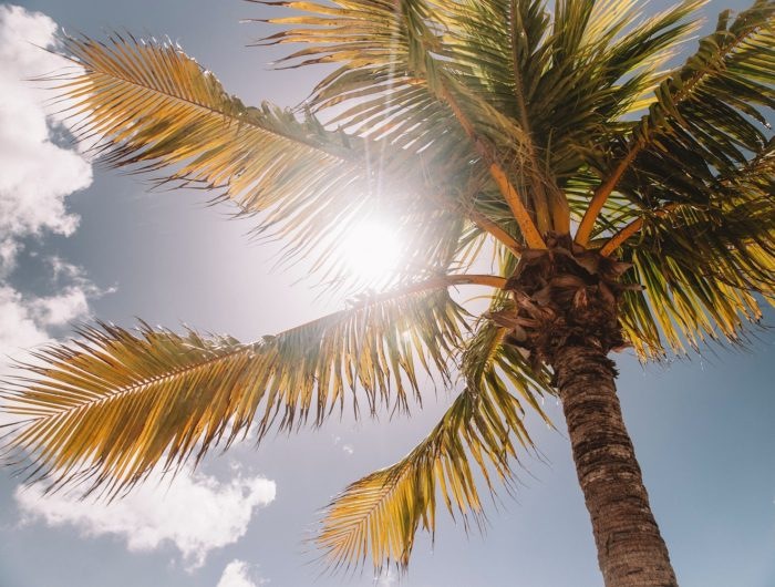 Palm and sunshine
